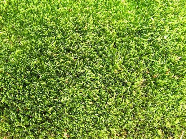 Les qualit s d 39 une fausse pelouse - Fausse pelouse interieur ...